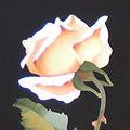 Arte Decorativa di Fiordelisi Simone: Quadri, Rosa