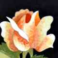 Arte Decorativa di Fiordelisi Simone: Images, Small Rose