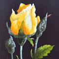 Arte Decorativa di Fiordelisi Simone: Images, Rose jaune